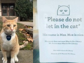 Μαξ, ο γάτος και η βιβλιοθήκη